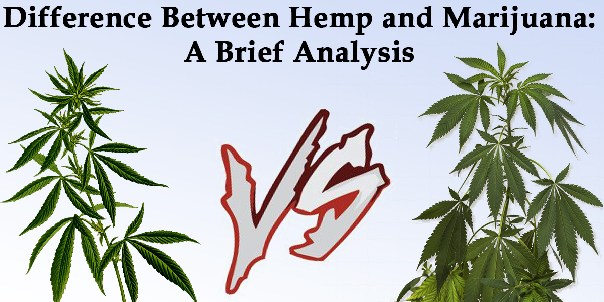 Difference Between Hemp and Marijuana